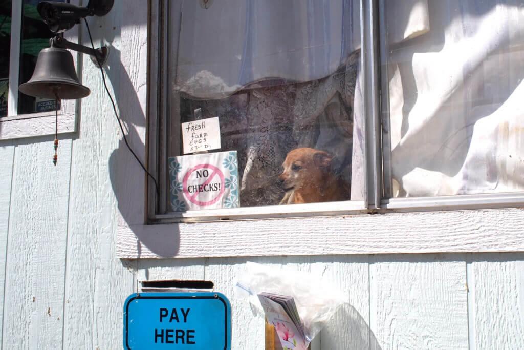 Reception Dog