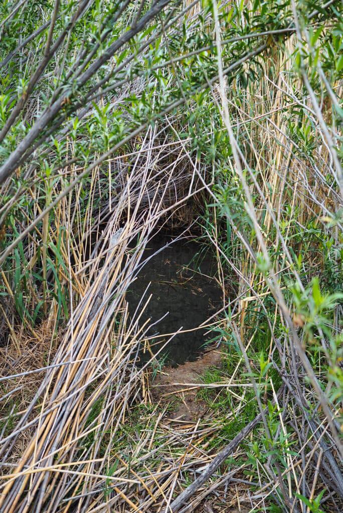 Bamboo Pool 1