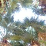 Five Palms Warm Well Oasis, California